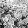 An Inconvenient Plant