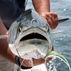 The U.S. Revolutionizes Its Fishing Policy