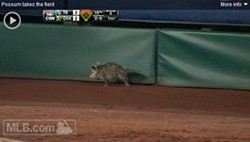 Awesome possum - MLB.COM