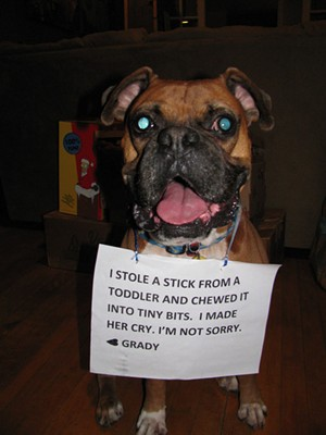Awwwwww - VIA DOGSHAMING.COM