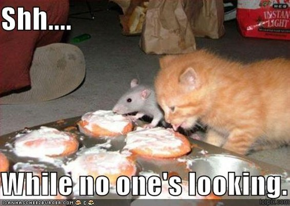 funny_pictures_kitten_and_rat_eat_cupcakes_together.jpg