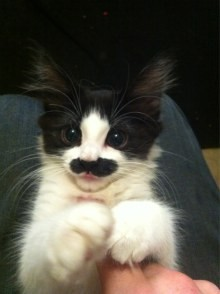 Because unemployment can be bleak, here's an unrelated but uplifting photo of a kitten with a mustache. - HTTP://CUTESTUFF.CO