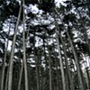 Best Places to Recreate in Golden Gate Park