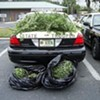 Drugs and Marijuana Dominate Nation's Arrests -- As Usual