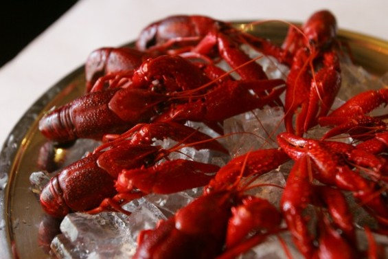 Cajun House and it's good-looking crayfish are coming to San Mateo. - MIKE KOOZMIN/THE S.F. EXAMINER