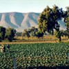 California Wants to 'Decriminalize' Immigrant Farm Workers