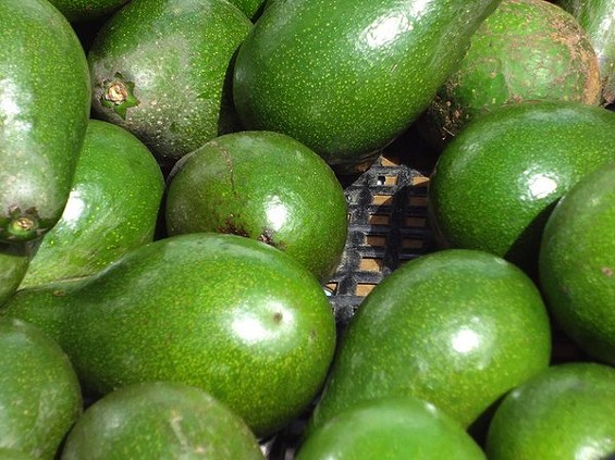 Can a mess of avocados and you'll have access to green stuff all year long. - SEAN TIMBERLAKE