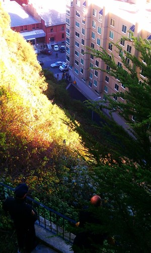 Cops and firefighters peer down the hillside from a private backyard - JOE ESKENAZI