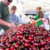 Despite the Fog, Fort Mason Farmers' Market Off to a Warm Start