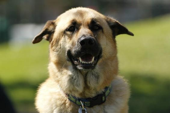 (dog) - CHRISTOPHER VICTORIO