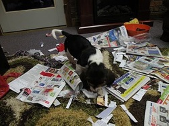 Dogs care about the texture of a newspaper. People don't.
