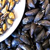 Don't Eat Recreationally Harvested Mussels in Marin Right Now