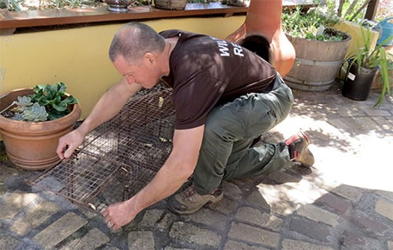 Duane at work - WILDLIFE EMERGENCY SERVICES