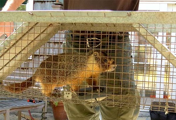 Duped by organic fig newtons every time! - WILDLIFE EMERGENCY SERVICES