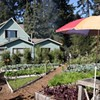 Gardening Classes at Love Apple Farm, Source of Manresa's Veggie Magic