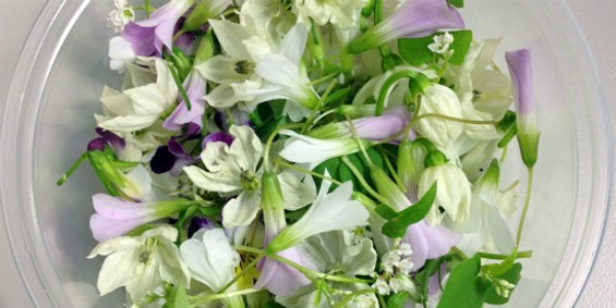 Edible flower mix from Ecopia Farms - ECOPIA FARMS