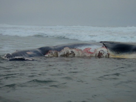 Either way, it's a shame - KIRSTEN LINDQUIST, FARALLONES MARINE SANCTUARY ASSOCIATION