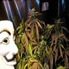 #OpCannabis: Anonymous Pushing Marijuana for 4/20
