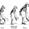 Florida Says Evolution Happened: by One Vote