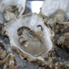 Does it Make Sense for Vegans to Eat Oysters?