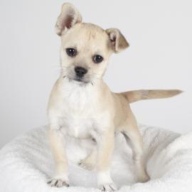 From what we heard, she barks for Barack - SPCA