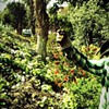 Get Earthy at Hayes Valley Farm