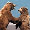 Grizzly Fate