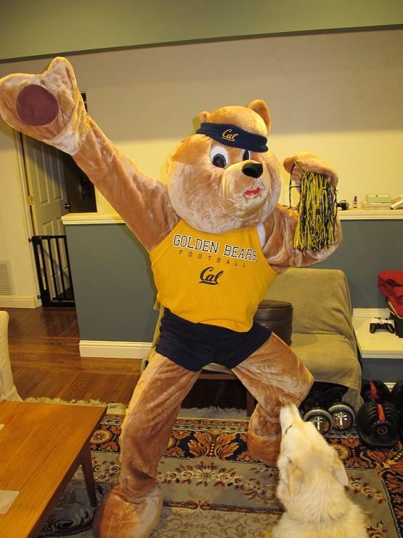 bear_suit.jpg