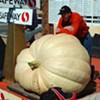 Half Moon Bay Pumpkin Weigh-Off: Now With Bigger, Uglier Squash