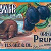 Prunes: The New Medical Wonder Cure!