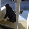 Holiday Parcel Thieves Are Back. Watch This Guy Steal Packages From a Bernal Heights Home