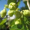Hophead's Guide to Harvest Season Beer Events