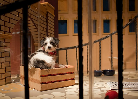 How much is that doggy in the window? Not much!
