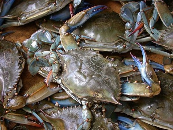 If I'm going, some blue crabs are going with me - TIGER/TOWSON