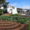 Tuesday: Supes Vote on Easing Restrictions for Urban Farmers