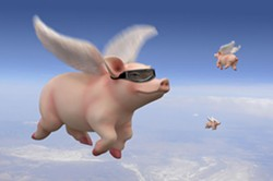 Is this pig high or are you?