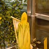 Today Is Your Last Chance To Breathe In SFSU Corpse Flower's Delicate Stench Until God Knows When
