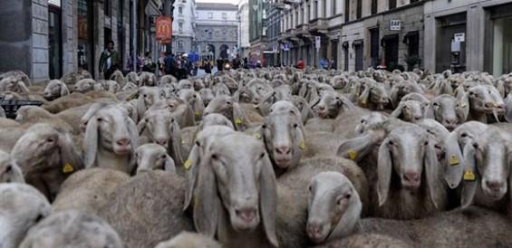 Italian documentary The Last Shepherd shows Sunday, March 31 at 7 p.m.