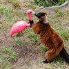 It's Monday: Look at These Lemurs Kissing A Pink Flamingo