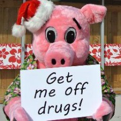 Joe the Pig wants to keep animals off drugs.