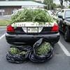 SFPD Returns Seven Pounds of Marijuana to Grower