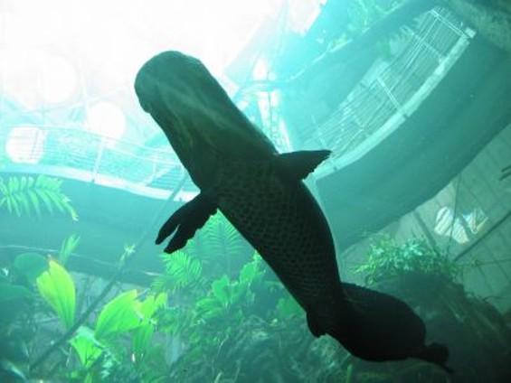 aquarium_small.jpg
