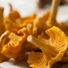 Learn to Forage Mushrooms This Weekend with ForageSF