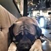 Best Bar Dog