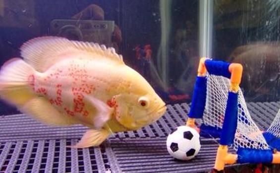 fishschool_thumb.jpg