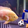 Life Can Wait, Use Up All Spare Time to Train Your Fish to Play Fetch