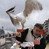 S.F. Seagull Steals Camera, Goes on Photo Shoot at Crissy Field