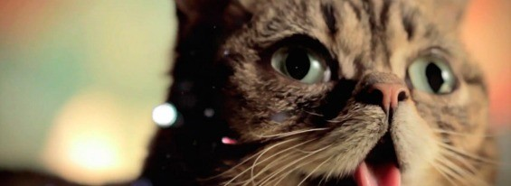 Lil Bub is about to become even more of a cat-lebrity. - FIRST ANNUAL SAN FRANCISCO INTERGALACTIC FELINE FILM & VIDEO FESTIVAL FOR HUMANS