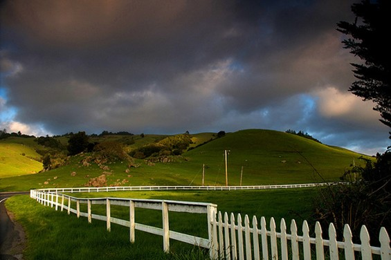 MALT is trying to preserve this swath of Nicasio hillside. - GCQUINN/FLICKR