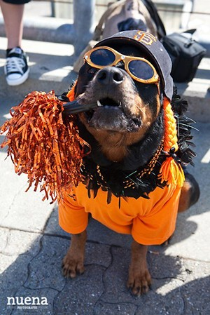 Matt Cain fan - NUENA PHOTOGRAPHY/COURTESY OF THE SPCA